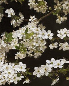 mia-tarney-cherry-blossom