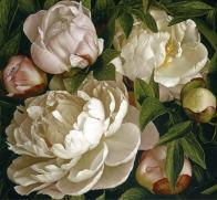 Mia Tarney Peony Gardenia
